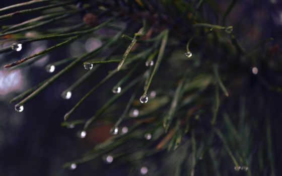 дождь, капли, plants, drop, макро, dark, ёль, фон,