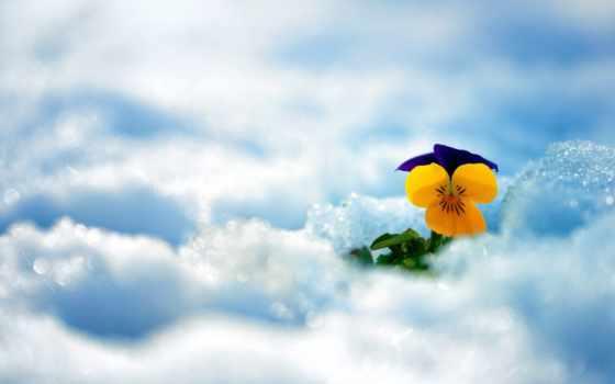 снег, цветы, winter