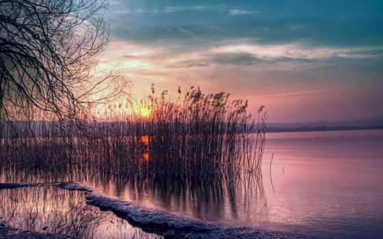 закат, озеро, willow, небо, камыш, full, природа, розовый,