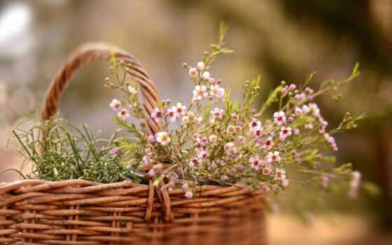 цветы, поле, тег, уже, психолог, букет, koshik, cvety