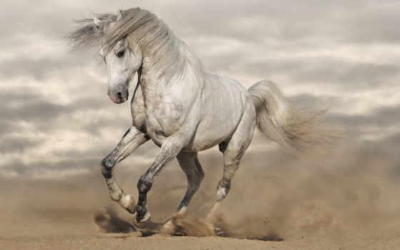 ani, календарь, лошадь