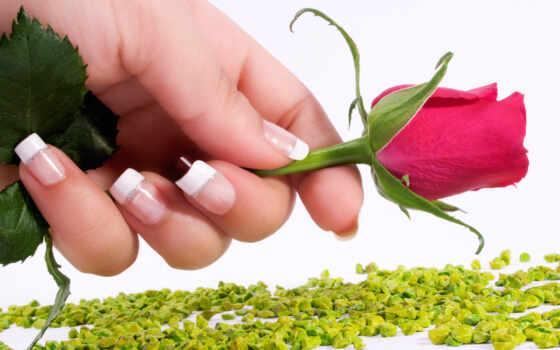 роза, red, flowers Фон № 59009 разрешение 2560x1600