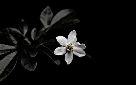 белое, white, чёрное