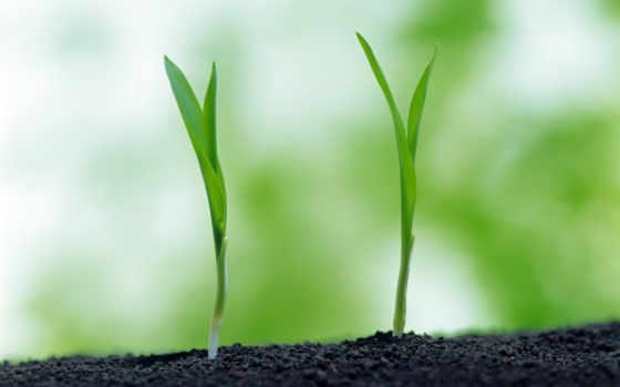 макро, зелёный, earth, трава, росток, природа,