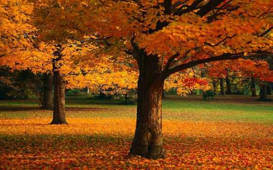 осень, листья, деревья Фон № 81086 разрешение 1920x1200