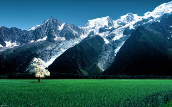 дерево, glacier, гор, bossons, горы, луг, картинка, небо, трава, разрешений, fone,