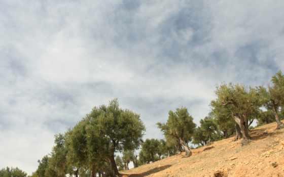 sciene, rolagem, landscape
