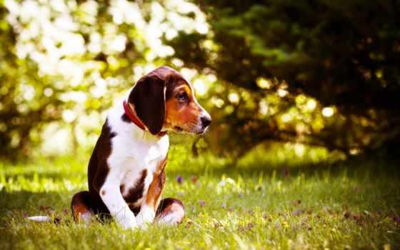 flickr, photos, lgp, bertta, tagged, picssr, browse, финский, собака,