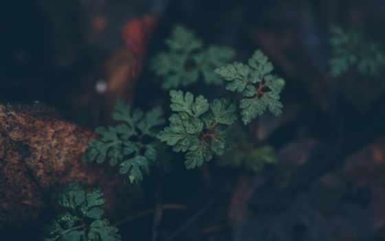 википедияnature, переводе, англ, природа, pests, are, regarded, one, публикует,