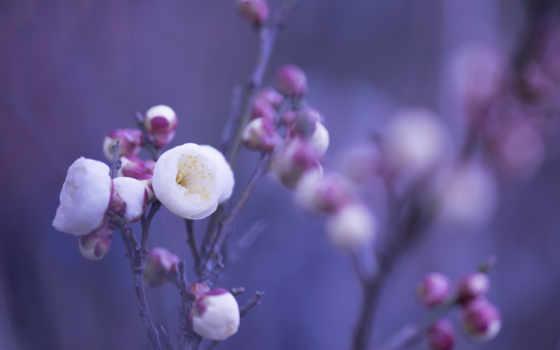 макро, cvety, лепестки, розовые, бутоны, белые, веточки, широкоформатные, осень,
