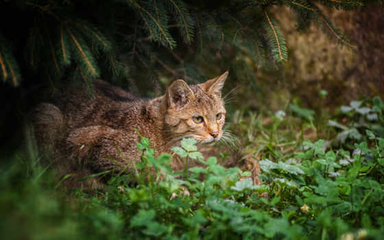 трава, кот, лес