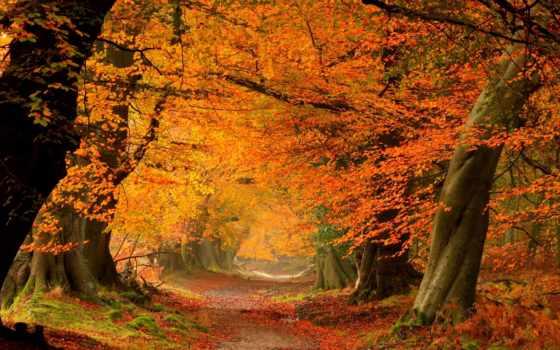 , листва, алея, деревья, осень,