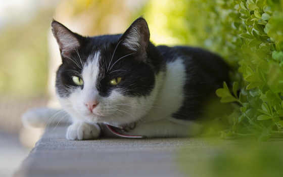кот, чёрно, white, кошки, кота, белого,