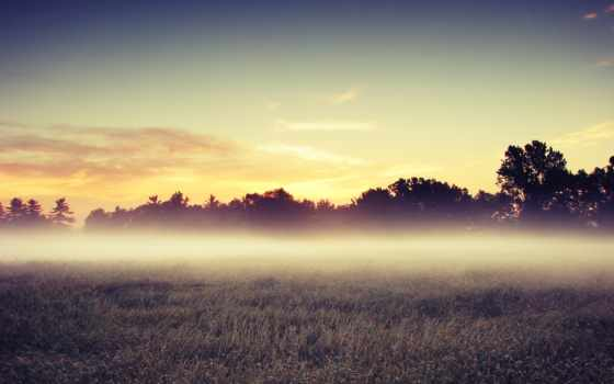 туман, поле, утро Фон № 133762 разрешение 2560x1600