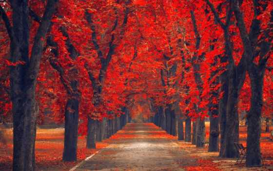 favorites, осень, аллея, tapetes, flickr, park, bakgrunnsbilder, природа, plochu,