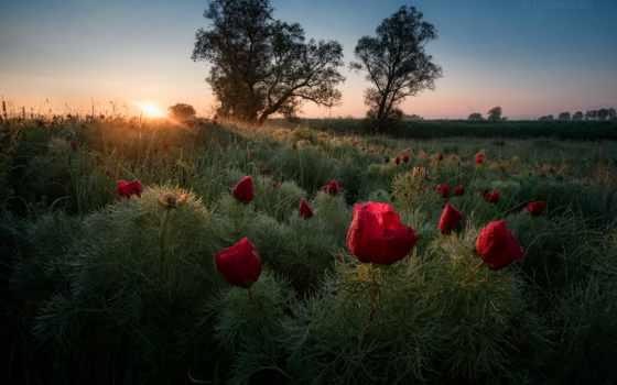 tapety, wschód, фото, photos, rashkovski, drzewa, słońca, утро, болгария,