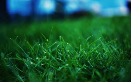 поле, травка, зелёная, everything, футбольное, разных, разрешениях, молодая, пробивается,