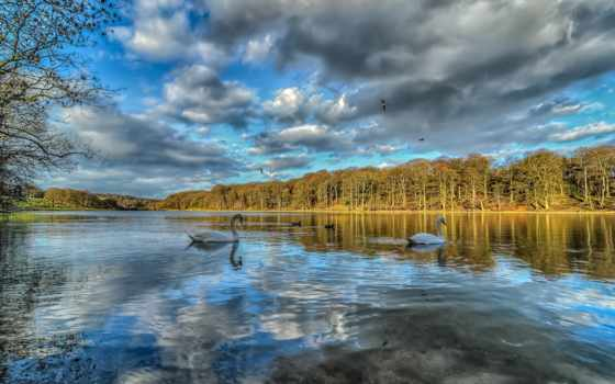 природа, free, река, kartinik, trees, fond, landscape, осень, paysage, лебедь