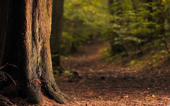 мотивация, день, roots, тропинка, trees, ствол, кусты, каждый, лес, иголки,