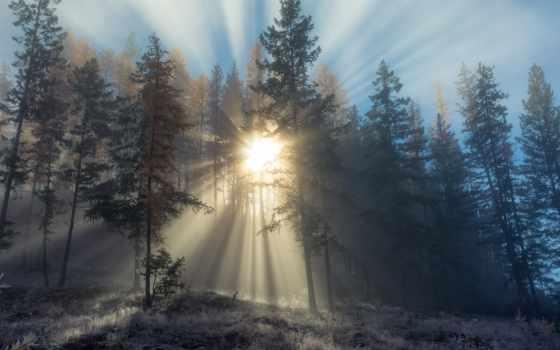 sunbeam, туман, солнечный, desktop, природа, леса,