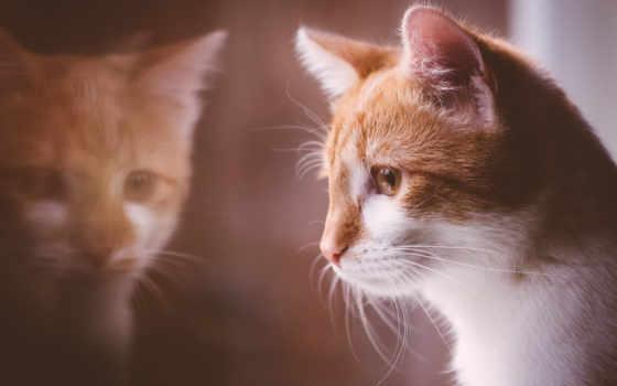кот, short,