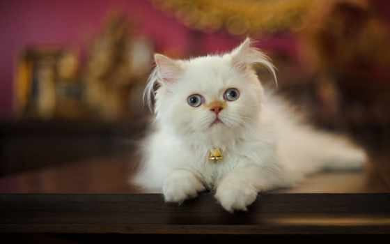 кот, щенок, white