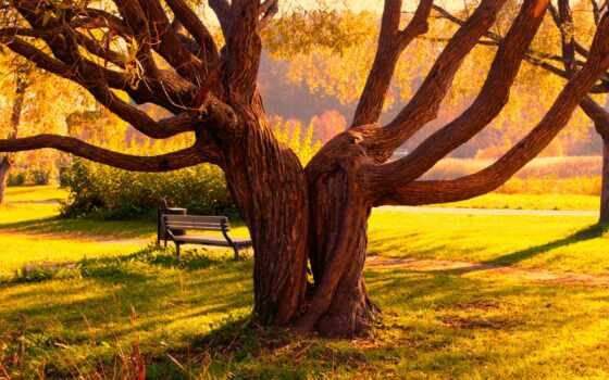 дерево, осень, park, тропинка, trail, landscape, srastis, природа