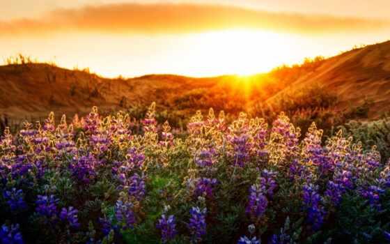 цветы, природа, landscape