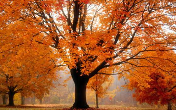 осень, дерево, landscape