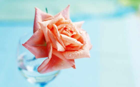 цветов, kingdom, цитатник