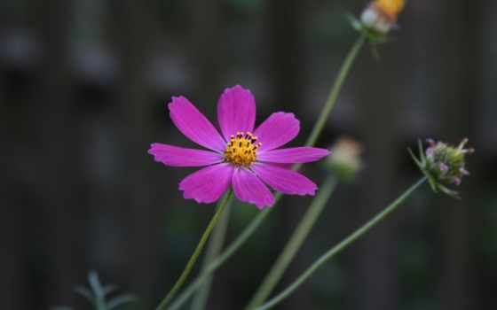 цветы, растение, like