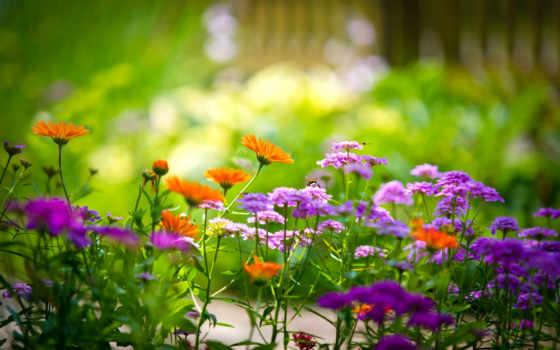 цветочки, flowers, garden, добавить, daler, tract, summer, избранные, аккаунт, using,