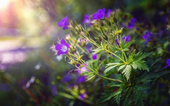 cvety, papel, flores, fone, размытом, канцелярія, сучасна, тетради,