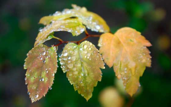 дождя, капли, фотографий, после, стекле, способность, розы, макро, waters, алые,