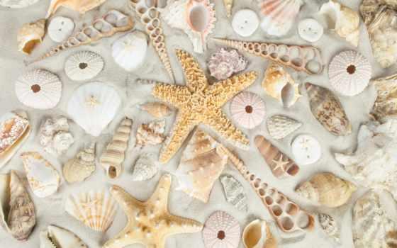 песок, seashells, пляж, starfish, море, stock, shells, shell, изображение,