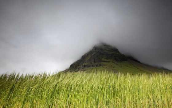 mist, природа, поле