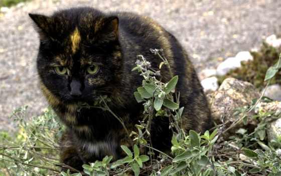кот, negro, animals