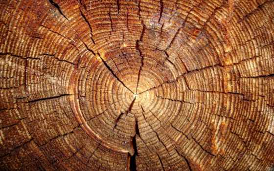 дерево, slice, коллекция, cut, фотофон, card, текстура