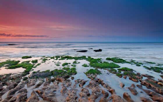 море, риф, ocean, vodorosl, мох