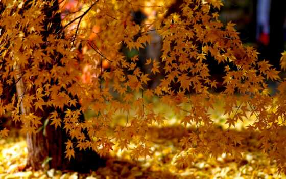 листья, природа