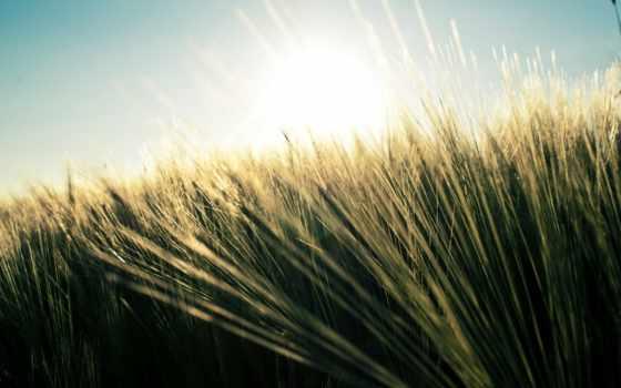 природа, поле, трава