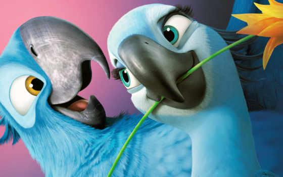 попугаи, rio, синие