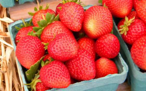 , клубника, коробочки, ягоды,