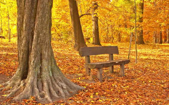 осень, осенние, фоны, клипарт, park, растровый, природа,