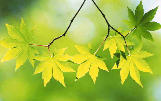 листва, зеленые, воспоминания