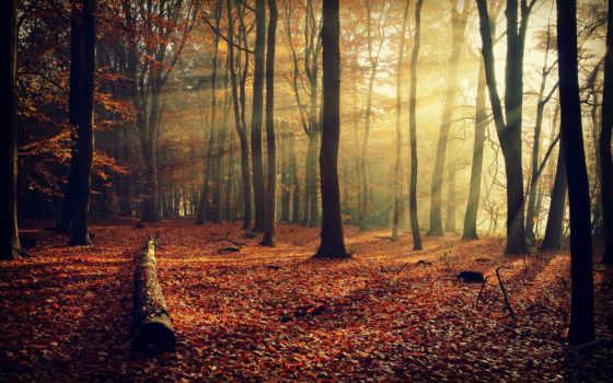 деревья, осень