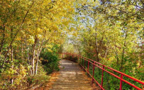 природа, осень Фон № 33613 разрешение 1920x1200