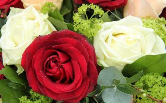 розы, цветы, букеты