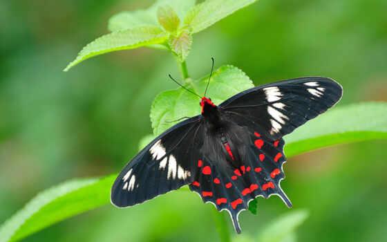 full, бабочка, priroda
