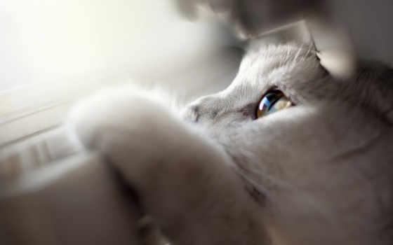 красивые, девушки, котики